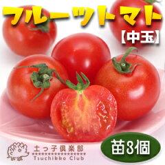 ほどよい甘みと酸味、コクのある美味しさで人気の「フルーツトマト」です。フルーツトマト(中...