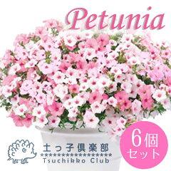【ただ今開花中】鉢植え、庭植え、ベランダガーデニングに最適です。強い日差しにも負けないペ...