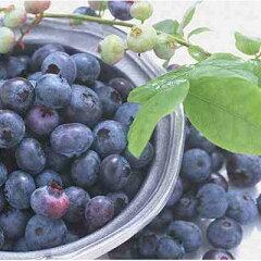 ベランダガーデニングにもピッタリ!酸味と甘味がバランスよく、高い評価をもつブルーベリーで...