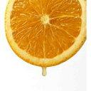 清見オレンジ 接ぎ木15cmポット苗