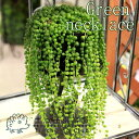 自然って不思議です。グリーンピースみたいなのは「葉」です。グリーンネックレス(緑の鈴) 7....