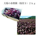 【2021年度】大原の赤紫蘇(枝付き)2kg梅干5kg用