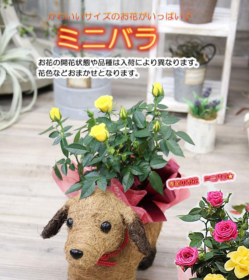 送料無料【可愛い瞳が人気♪選べるわんこの背中に季節の鉢植え】鉢花鉢植え寄せカゴ