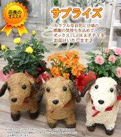 送料無料【可愛い瞳が人気♪選べる わんこの背中に季節の鉢植え】鉢花 鉢植え 寄せカゴ