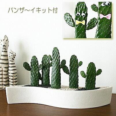 観葉植物モダン インテリア ...