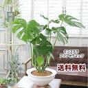 送料無料【アクアセラミック モダンに飾る大きな葉はアジアンで人気No1...
