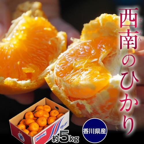 新種のみかん 香川産「西南のひかり」 約5キロ