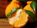 柑橘 高級 ギフト 贈答 和歌山県産 長期樹上熟成 橋爪さんの大玉俊菓デコ 秀品 4Lサイズ 6玉 約2kg 産地直送 送料無料