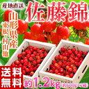さくらんぼ 佐藤錦 送料無料 山形産 Mサイズ 約1.2kg...
