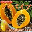 宮崎県産 『パパイア』(サンライズソロ種) 秀品・1玉 約1kg 常温 frt ☆