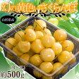 山形県産 幻の「黄色いさくらんぼ」 M〜3Lサイズ 約500g ※冷蔵 frt ☆