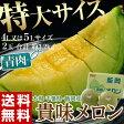《送料無料》千葉県・飯岡産 貴味メロン(青肉) 4〜5L×2玉 約3.2kg frt ☆