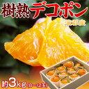 愛知県 蒲郡産 『樹熟デコポン』 青秀品 約3kg (8〜12玉) 化粧箱 ※常温 送料無料