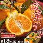 《送料無料》和歌山県産長期樹上熟成デコポン「俊菓」5〜6玉約1.8kg産地直送frt☆