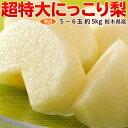 梨 送料無料 栃木県産「にっこり梨」秀品 5〜6玉 約5kg...