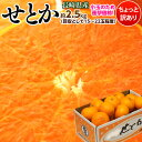 せとか 柑橘 みかん ミカン 蜜柑 長崎産 せとか バラ詰 ...