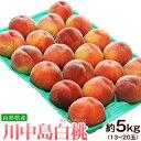 桃 もも モモ 山形県産 川中島白桃 約5kg(13〜25玉)送料無料