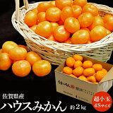 『ハウスみかん』 佐賀県産 JAからつ 約2kg(目安として60~64玉) 超小玉 4S 簡易包装 ※常温 送料無料