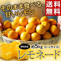 突然変異の甘いレモン《送料無料》静岡産 『レモネード』 S〜L 約5キロ frt○
