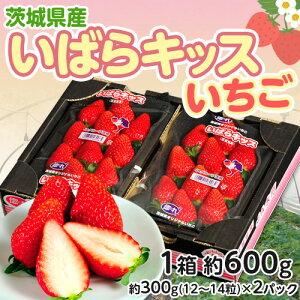 茨城県産『いばらキッスいちご』 2〜4Lサイズ 1箱 約600g(300g〈12〜14粒〉×2…