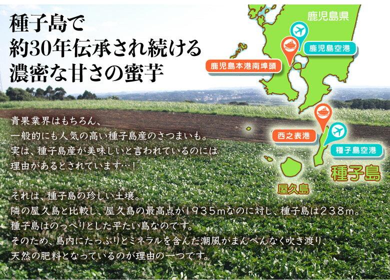 焼き芋やきいも鹿児島県種子島産みつ姫500g×2袋合計1kg冷凍温めるだけ送料無料