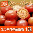 大玉フルーツトマト!【常識外れの大きさ】 茨城産 フルーツトマト 大玉 産地箱(A〜B品) 16〜20玉 約3.5kg