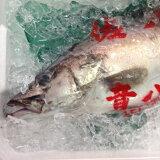 アラ 超高級魚 幻の魚 新潟他 約2-3キロ 食通の魚 極上の刺身【アラ2-3K】 冷蔵