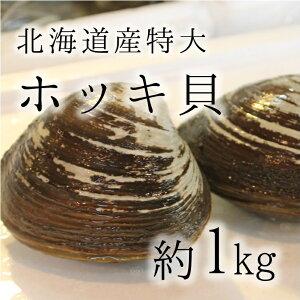 活けホッキ貝 北海道産 計1kg(約500g/個x2) 豊洲直送 高級貝類 北寄貝 ウバガイ【ホッキ貝1K(2個)】 冷蔵