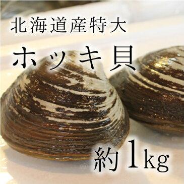 活けホッキ貝 北海道産 計1kg(約500g/個x2) 築地直送 高級貝類 北寄貝 ウバガイ【ホッキ貝1K(2個)】