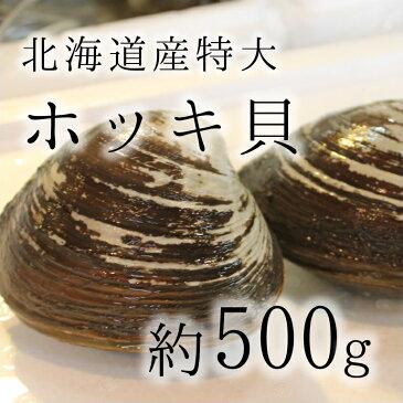 活けホッキ貝 北海道産 約500g/個 築地直送 高級貝類 北寄貝 ウバガイ【ホッキ貝500g】