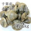 ホンビノス天ぷら(鉄腕ダッシュで紹介)ホンビノス貝のレシピ