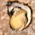 岩牡蠣 椿 長崎県五島列島 計10個(約170〜230g/1個)築地直送 ギフト ツバキ つばき 鮮魚 養殖岩牡蠣【ツバキ10個】
