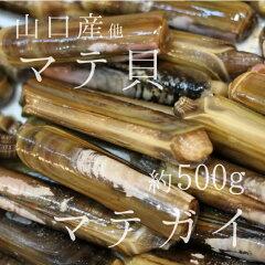 マテ貝 生 約500g 国産(山口県産 他)【築地直送】旬の貝類 マテガイ