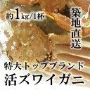 特大活ズワイガニ 最高級品 兵庫/福井産 松葉ガニ/越前ガニ...