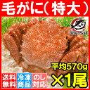 【送料無料】特大 毛ガニ 毛蟹 浜茹で毛がに姿 平均570g...