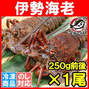 【3尾で送料無料】伊勢海老 国...