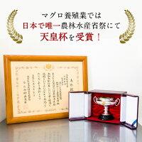 天皇杯受賞の国産本マグロ大トロ中トロ赤身セット