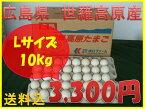【送料込】世羅高原たまご 白玉 Lサイズ 10Kg詰め (160個)☆