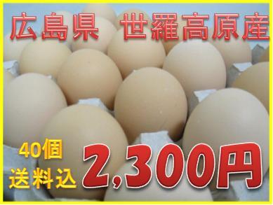 【送料込】コスモス卵 ピンク 40個入り  【楽ギフ_包装】☆