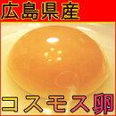 送料込コスモス卵たまご
