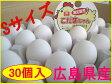【送料込】Sサイズのたまご こだまちゃん (30個入) 02P19Dec15