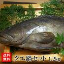 【送料無料】幻の魚クエの切り身セット1.5kgクエ鍋用の切り身・ブツ切りお刺身・しゃぶしゃぶ用の三枚おろしのダブルセットくえあらアラ鍋