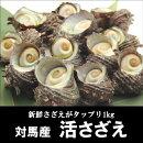 対馬産ヒオウギ貝30個入【ギフト】【お歳暮】【ひおうぎ貝】【浅茅湾】