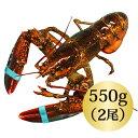◆活オマールロブスター(550gx2尾)お買い得/カナダ直輸入/活/オ...