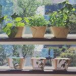クリスタルポット『バジル』虫のわかない栽培キット園芸観葉植物食育ペットマトバジルガーデン