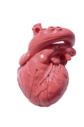 ★ポイント最大15倍★【送料無料】-CardioModelEV(成人正常 XC-03T(アカチャクショク) 品番 my24-7808-00-- 1入り-【MY医科器機】