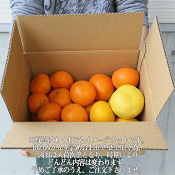 【f05】【予約販売】吉田みかん詰め合わせファミリーセット5kg【※発送は天候にもよりますが1月下旬頃〜入荷次第順次発送】【多少の枝傷・葉傷・黒点等が含まれます。】【送料無料】みかん柑橘フルーツ果物