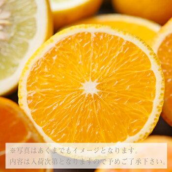 【f07】【予約販売】吉田みかん詰め合わせファミリーセット7kg【多少の枝傷・葉傷・黒点等が含まれます。】【送料無料】みかんミカン蜜柑柑橘
