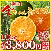 若みかん5kg/2,980円(税別)/【送料無料】