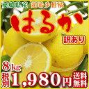 【Wはるか8】愛媛県産【訳有り】はるか8kg(酸っぱそうで酸っぱくない甘くてプリプリの希少柑橘)(訳有り・サイズ込)【全国どこでも…
